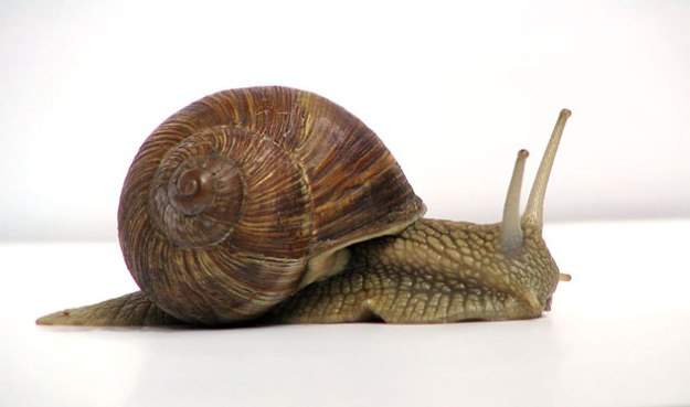 This is a snail